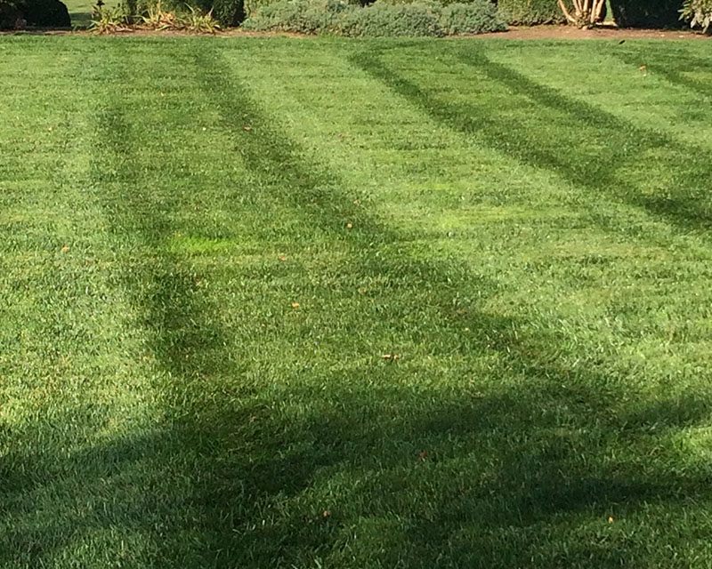 Professional lawn care services by whole 9 yards for new for Professional garden maintenance