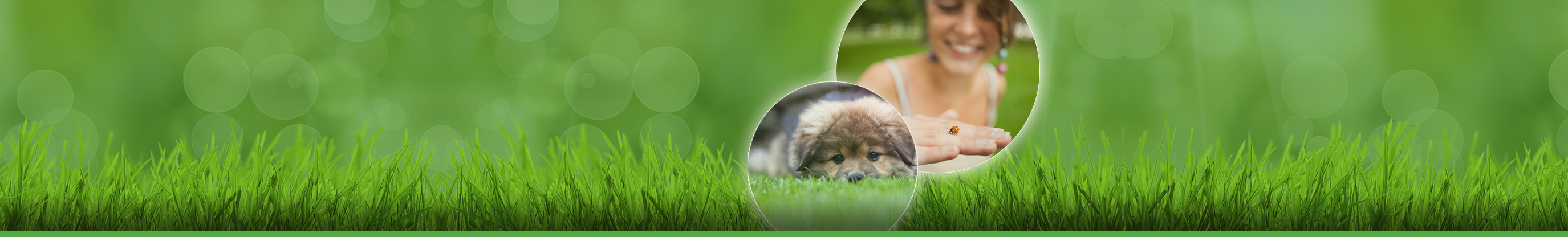 Professional Lawn Care by NJ-Based Landscape Company Whole 9 Yards.